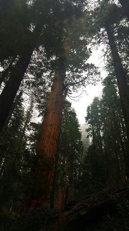 Три-Риверс, Калифорния: Sequoia and Kings Canyon National Parks