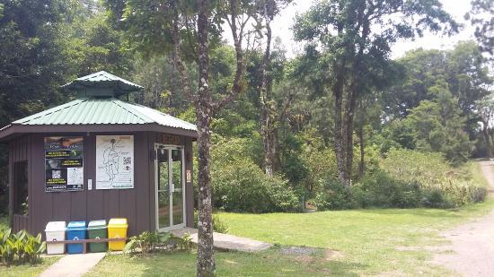 Monteverde, Costa Rica: Recepción de Ficus Trails rodeada de hermosos árboles