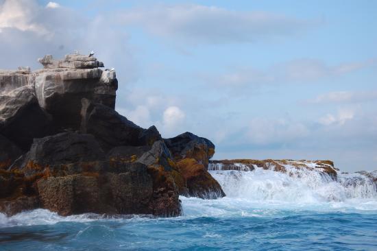 Puerto Villamil, Ekvador: Pahoehoe Tour Operator