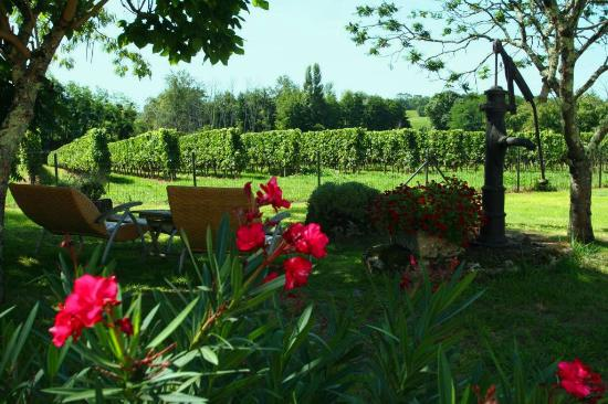 Les Salles-De-Castillon, France: Cosy corner in the garden, overlooking the vineyards