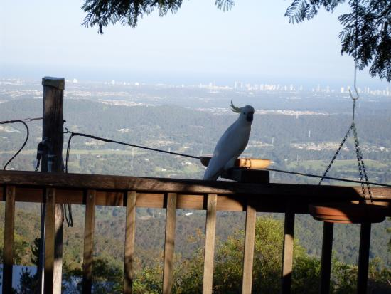Tamborine Mountain Bed & Breakfast: very tame birds at breakfast time...