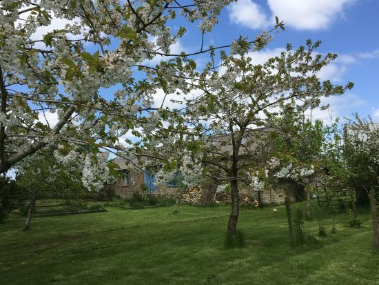 Mine Hill House: Orchard