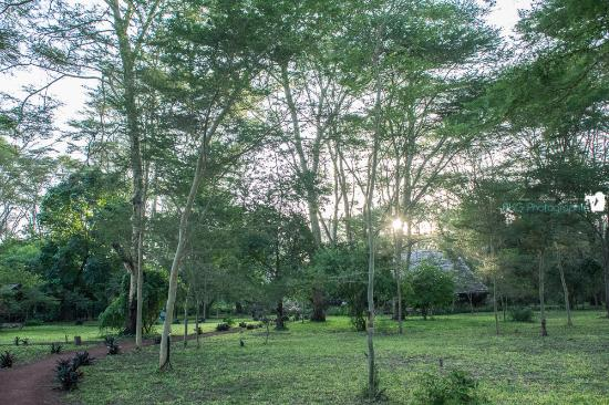 Migunga Tented Camp: Hauptgebäude