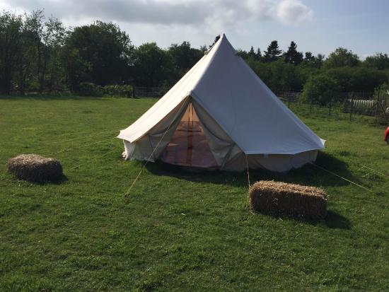 Welsummer Camping Image