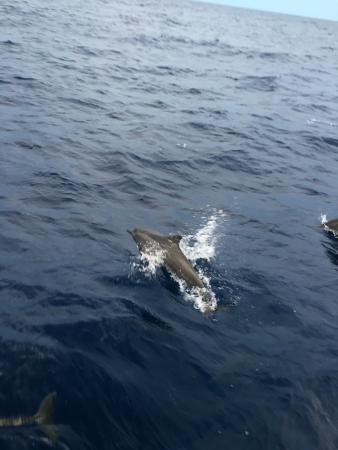 Kunfunadhoo: Sunset cruise with lots of dolphins...