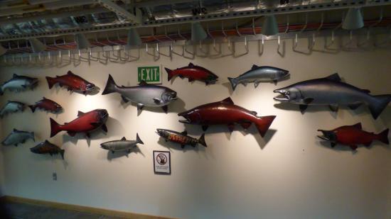 Kodiak, AK: Salmon Display