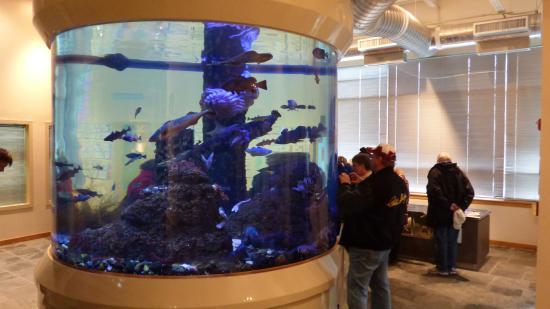Kodiak, AK: Aquarium