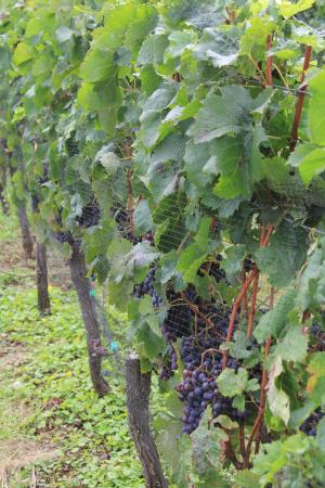 Boutique Wine Tours -  Tours: Wine in the making!