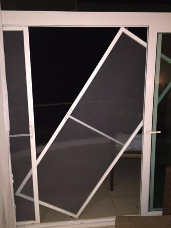 Iguana Crossing: Attempt to open our net door