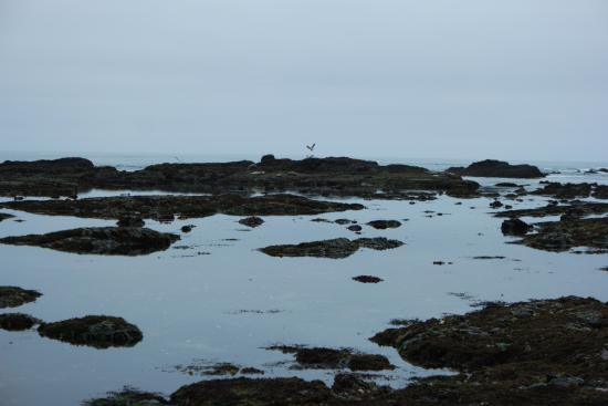 Moss Beach, Califórnia: Peaceful looking out and watching the harbor seals