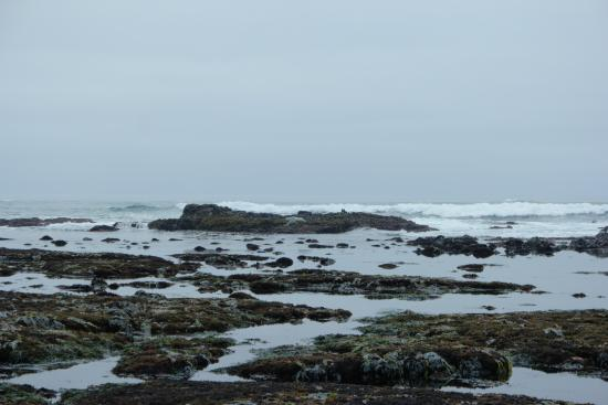Moss Beach, Califórnia: Looking straight out from the beach
