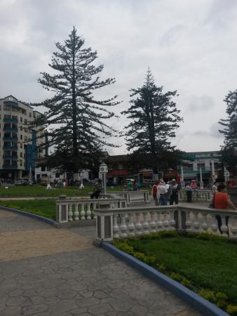 Parque Las Araucarias: Araucarias
