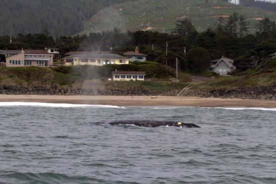 Depoe Bay صورة فوتوغرافية