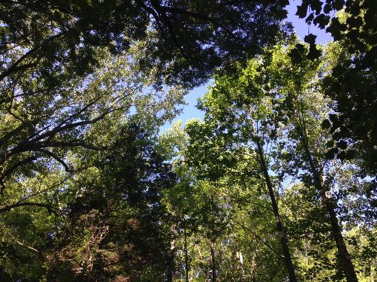 """Saunders-Monticello Trail: Things are """"looking up!"""""""