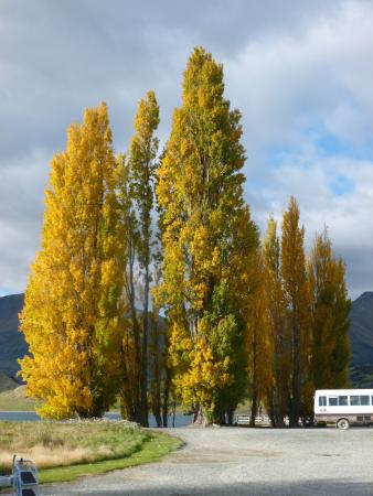 Queenstown, Neuseeland: Entranceto the farm--autumn colors on the trees