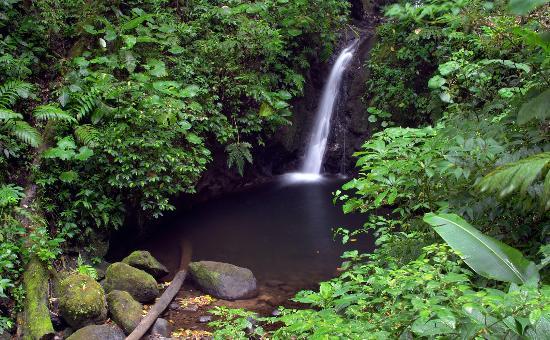 Monteverde Cloud Forest Reserve, Kostaryka: Catarata, Reserva Monteverde