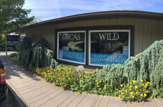 ‪Orcas Wildlife Institute for Learning and Discovery‬