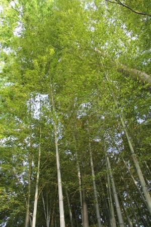 Kitakarasuyama 9 Chome Forest