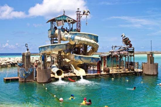 Image result for pelican plunge