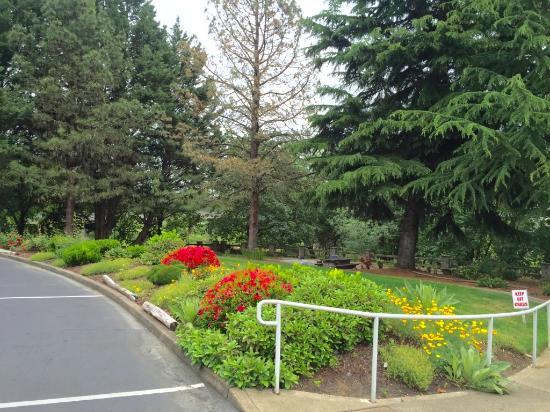 Roseburg, OR: Rose Garden