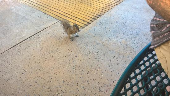 South Daytona, Floryda: MY CRAZY HUSBAND AND THIS SQUIRREL WHO WAS OBSESSED WITH HIM.