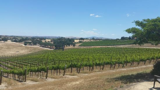 Creston, CA: August Ridge vineyard