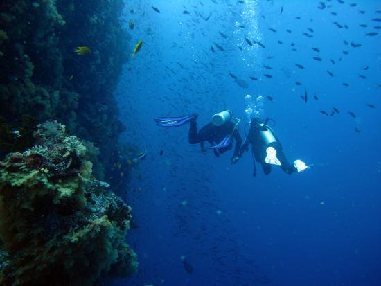 Rakiraki, Fiyi: Ra Divers, Mellow Yellow