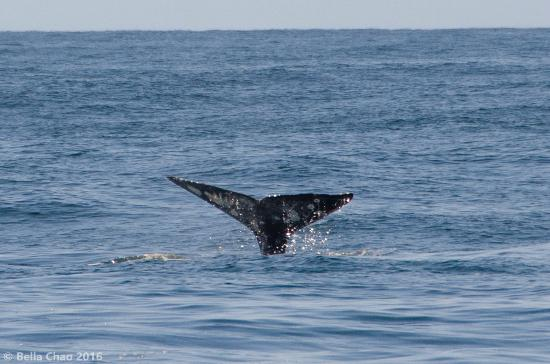 Whale watching, Dana Point