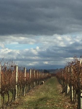 Ash Ridge Winery: photo0.jpg