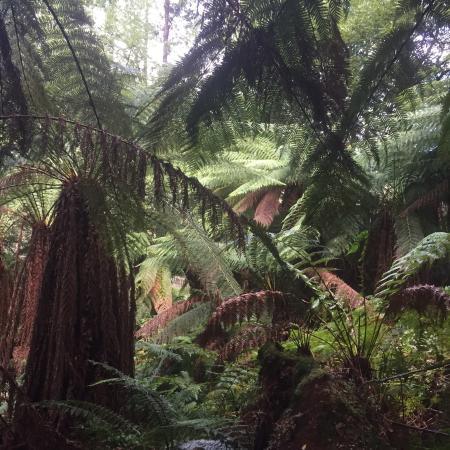 Moina, Avustralya: photo4.jpg
