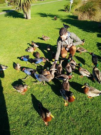 Waikanae, Nya Zeeland: Remember to buy the duck food at the office
