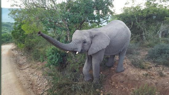 Grahamstown, Sudáfrica: 20160516_070952_large.jpg