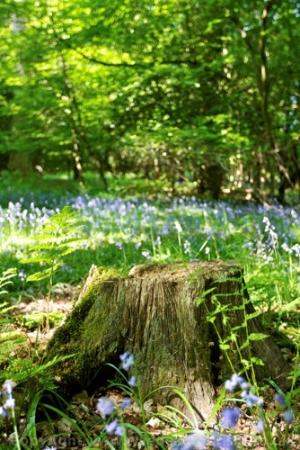 Forest of Dean, UK: Sping in the Forest