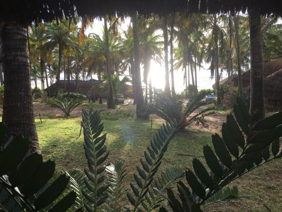 """Jeff's Palm Resort: View from Cabana """"E'"""""""