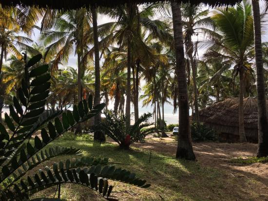 Jeff's Palm Resort Foto