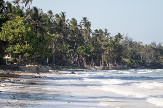 Simba + Oryx Beach Cottages: Plage à marée haute