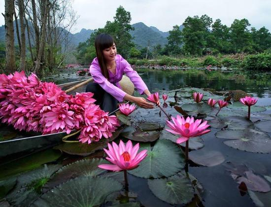 Vietnam lotus flower picture of viet flame tours hanoi tripadvisor viet flame tours vietnam lotus flower mightylinksfo