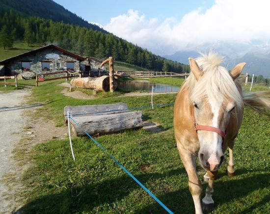 Ayas, Italia: Il pascolo