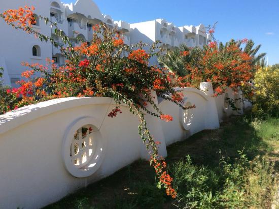 Homere Hotel : Phôtos de l'hôtel,de la plage à proximité et des alentours de l'hôtel