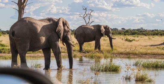 Savute Reserve: Elephants in Savute