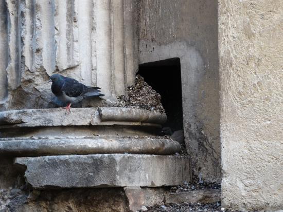 Chiesa Di Sant'ansano E Cripta Di Sant'isacco: stilobate di colonna romana del I sec. d.C. lordata dai piccioni