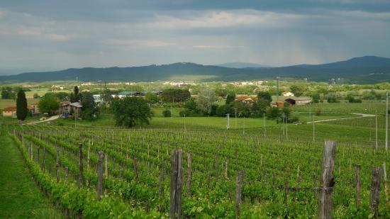Views of Petrolo vineyard