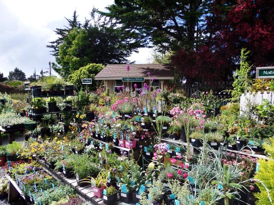 Over 150 Species Of Birds Live In Or Visit The Gardens Each Year Picture Of Mendocino Coast
