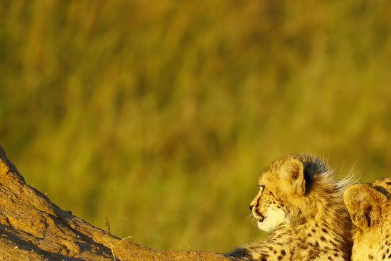 Phinda Private Game Reserve صورة فوتوغرافية