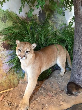 Nuevo México: Sevilleta National Wildlife Refuge