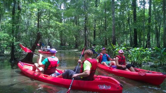 Mandeville, LA: Kayak Swamp Tours from New Orleans
