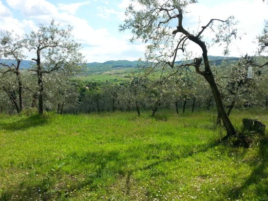 Ancora del Chianti Bed and Breakfast : A part of the garden. Chairs, diningtables, sunbeds at several places...