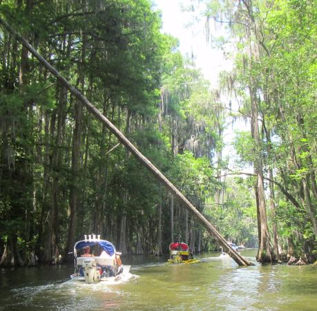 Mount Dora, FL: The historic cypress-lined waterway offers up close and personal views with the area's wildlife