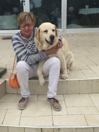 Bed and Breakfast Asko: In compagnia diAsko, Labrador dolcissimo