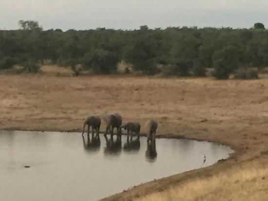 andBeyond Ngala Safari Lodge: photo1.jpg